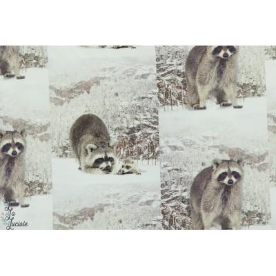 Tissu jersey Stenzo Raccoon  raton laveur animaux coton enfant nature