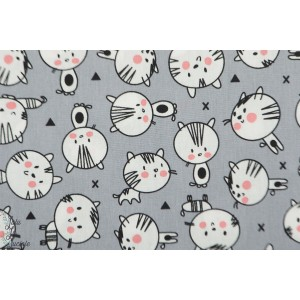 popeline cute cats poppy chat mignon matou minou animaux enfant gris