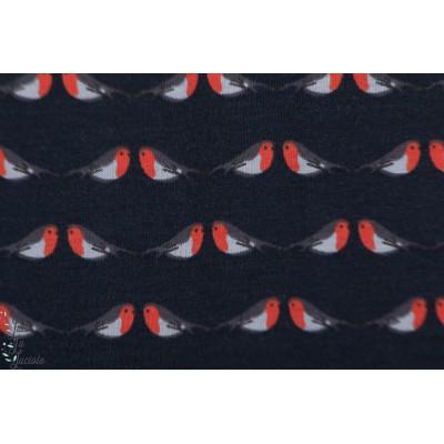 jersey Bio Robin Rouge C.Pauli rouge gorge oiseau graphique