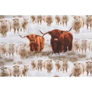 jersey Bio Highland Cattle By  Ernst