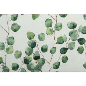 Jersey bio Tygdrômmar Eucalyptus vegetal feuille nature