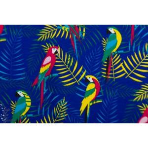 Jersey Parrots Marine oiseau péroquet ile bleu tropique