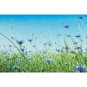 Panneau Jersey CORNFLOWERS champs de bleuet fleur about blue fabric